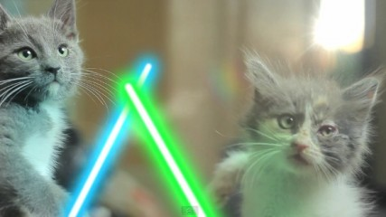 starwars-lightsaber-cats-jedi-kittens