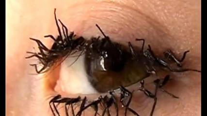 Flylashes- oeil pattes de mouches