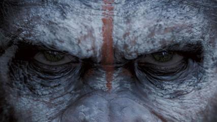 La Planète des Singes l'Affrontement Final : premier teaser trailer - une