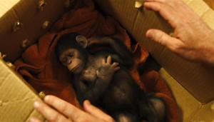 la-planete-des-singes-les-origines-1