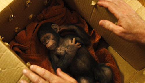la-planete-des-singes-les-origines-1.jpg