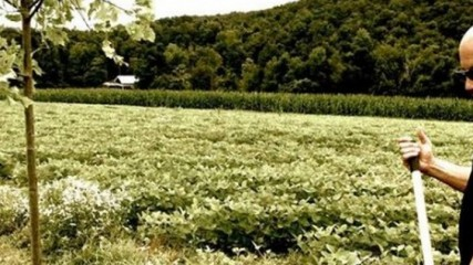 ALS Ice Bucket Challenge : Plantez un arbre