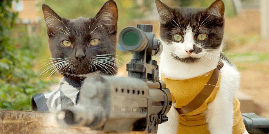 Cats vs Zombies : Des ...